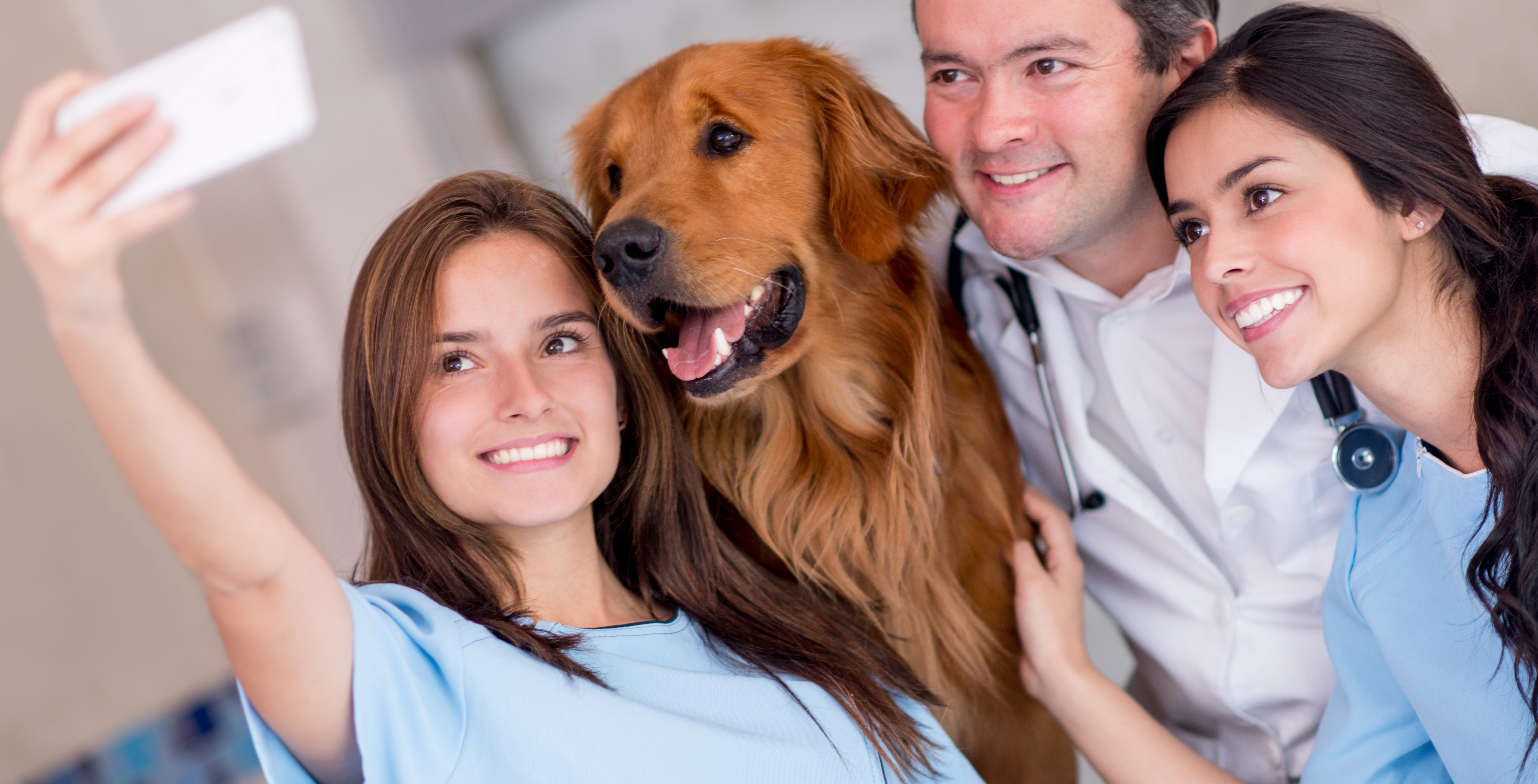 Veterinary sharps disposal