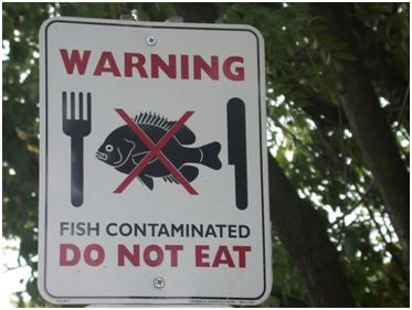 fishcontaminated.png